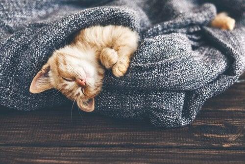 Ændringer i temperatur påvirker en kat