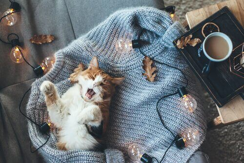 Grunde til, at katte ikke kan lide kulde