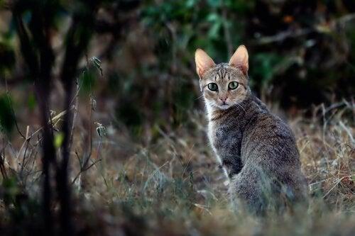 Historien om katte i det gamle Egypten