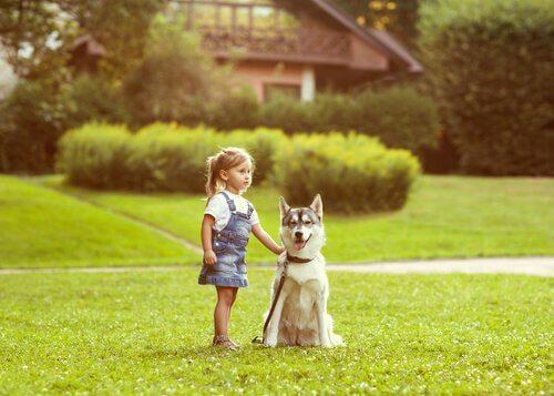Hundes stedsans er noget særligt