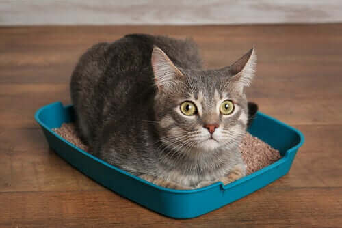 en kat sidder i kattebakken