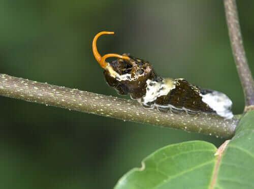 en larve på en stilk