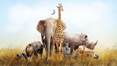 Vilde dyr på savanne