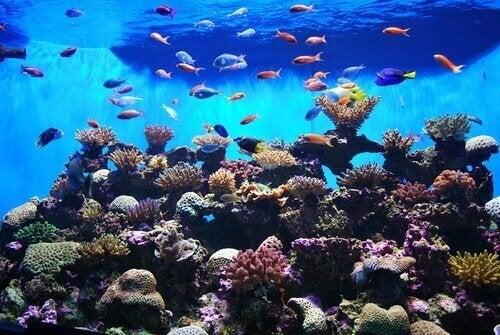 Lær om nogle meget smukke fisk til et akvarium