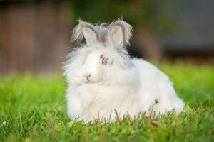 Kanin på græsplæne