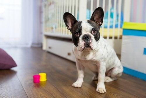 Hund på børneværelse har et blik, der siger, at hunde husker alt
