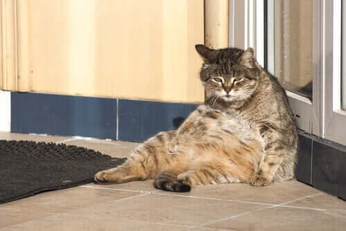 En dag i en kats liv - hvordan er det?