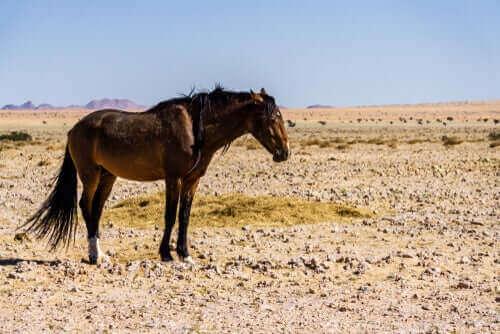 ensom hest i en ørken