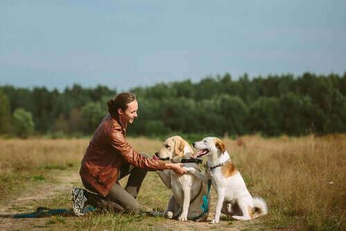 to hunde giver pote til kvinde