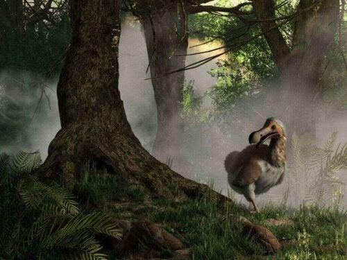 Dronten: Historien om et udryddet dyr