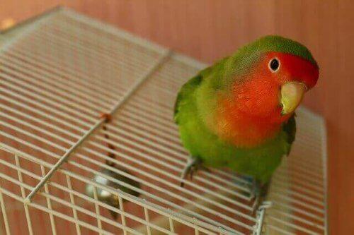 fugl ovenpå sit bur
