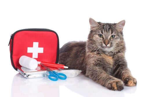 en kat ved siden af en førstehjælpstaske