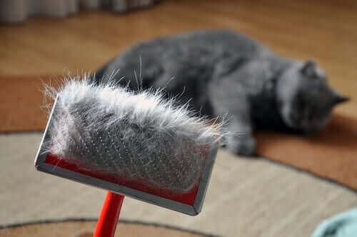 børste med en masse kattehår