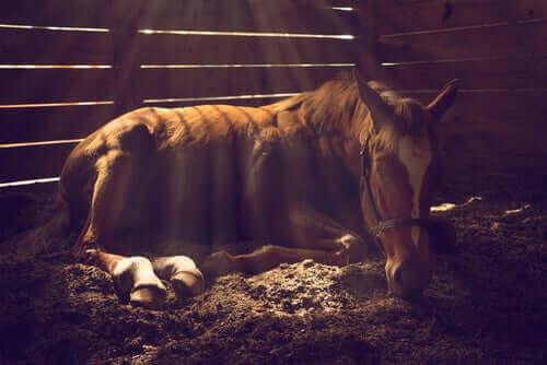 Der er flere typer almindelige hudproblemer hos heste, hvilket illustreres af hest i boks