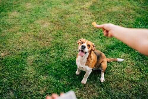 En hund på græs får en godbid