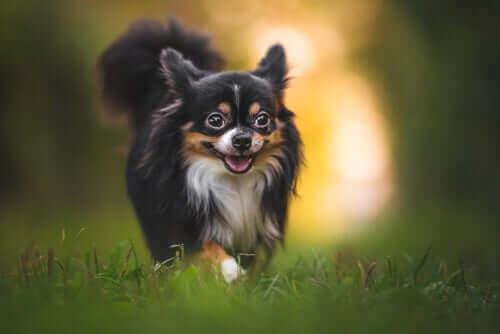Lær at beskytte en hund mod insektbid