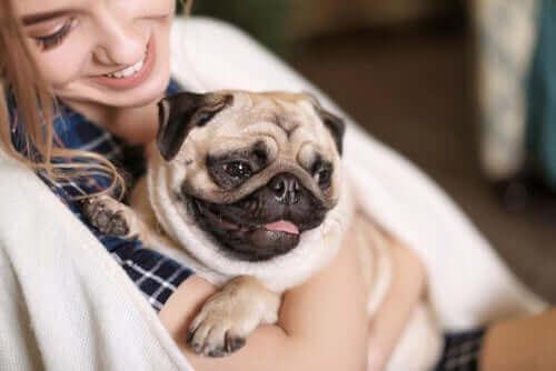En hund krammes af kvinde