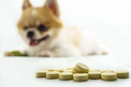 Naturlige versus kemiske kosttilskud til hundens led