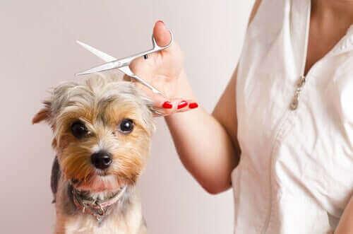 7 gode tips til at blive hundefrisør