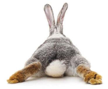 Hvad skal man gøre, hvis en kanin har diarré?
