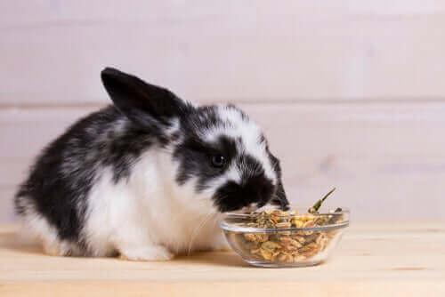 Spisende kanin illustrerer kaniners kost