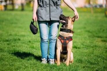 Trænede hunde versus konfliktmæglende hunde