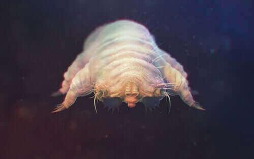 Nærbillede af en mide