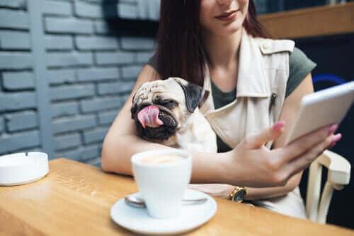 Regler for hunde på offentlige steder i USA