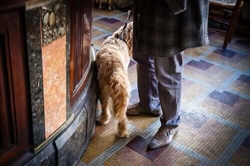 en hund er med i baren
