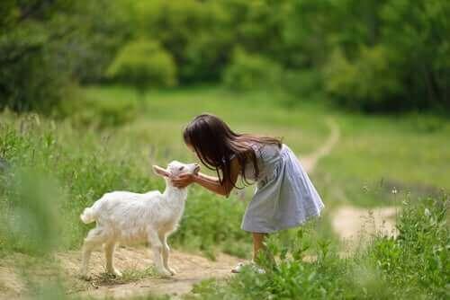 Pasning af geder: 4 ting, du skal vide