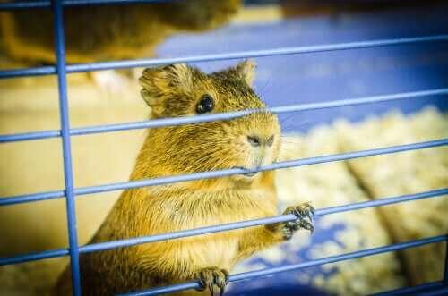 hamster gnaver i tremmerne