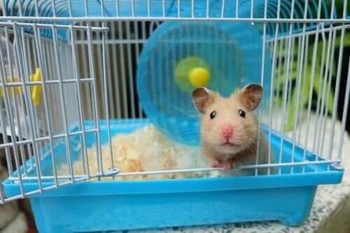 hamster kigger ud af sit bur