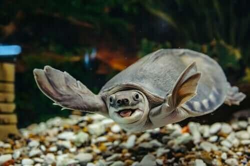 Sådan skal man passe en vandskildpadde