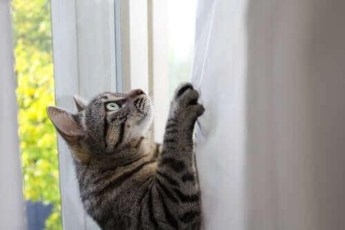 Hvad gør katte fleksible og adrætte?