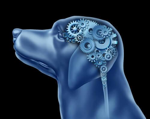 Kan hunde lide af obsessiv-kompulsiv lidelse?
