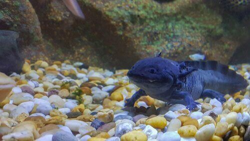flot dyr i vandet