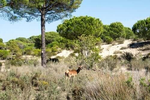 Natura 2000 netværket til at beskytte natur og vilde dyr