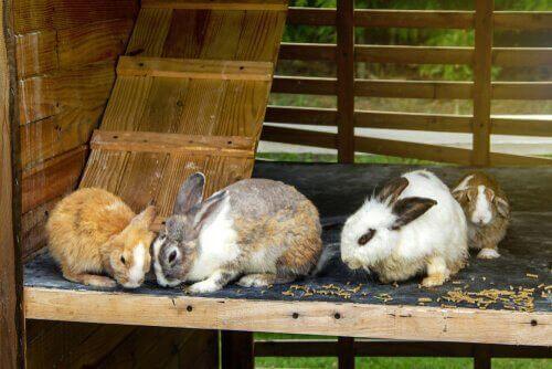 Kaniner i bur med flere etager