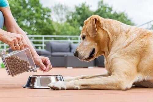 Person giver hund foder i skål for at give den ideelle portionsstørrelse til en hund