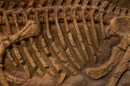 Fossil af en kæmpe papegøje