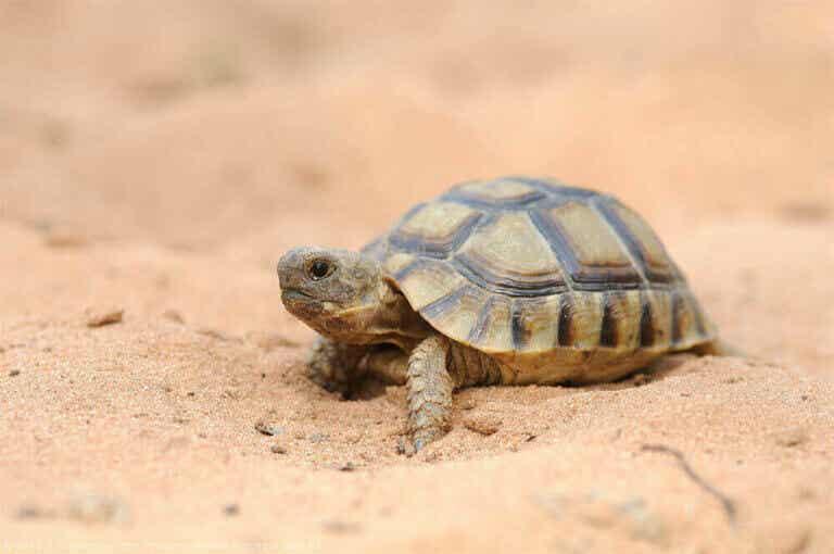 Den fascinerende verden af skildpadder i Spanien
