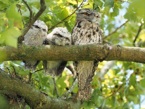 her en voksen fugl med to unger