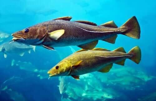 to fisk i vand