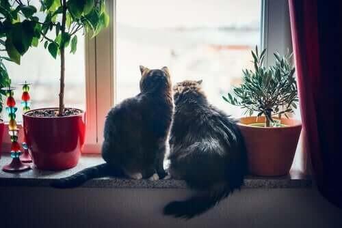 To katte sidder sammen i vindueskarmen