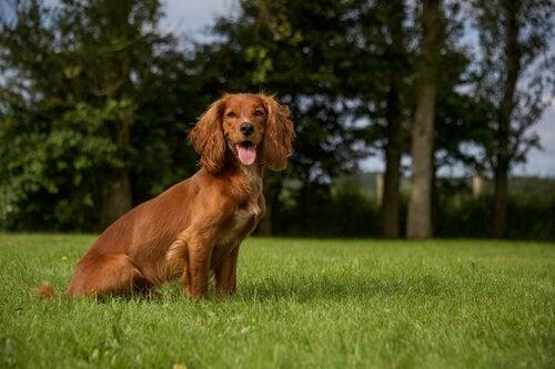 4 eksempler på hunde i litteraturen