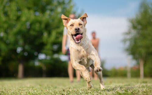 Hundeterapi for fanger i fængsler