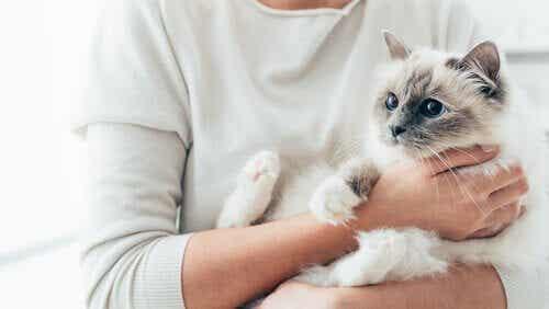 Hvordan kan du få en kat til at elske dig?