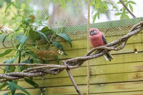 Rød fugl på gren