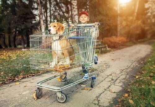 En dreng, der skubber hund i en indkøbsvogn, symboliserer, når man køber en stamtavlehund