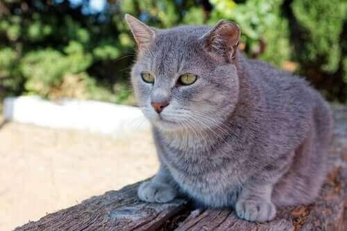 En kat, der sidder på et havebord